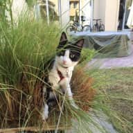 Pet sitter needed for my cat for 2 weeks in Dubai