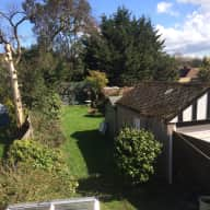 Cat sitter needed for 4 lovely cats in a semi-detached 3-bedroom house in North West London with big garden