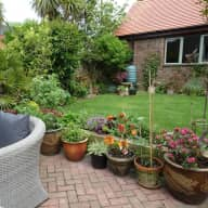 House sitter needed to look after and water the plants in our garden while we are away
