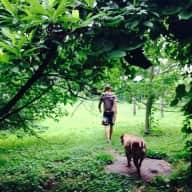 2 Bullmastiffs, single family home in Jamaica Plain
