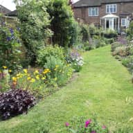London cat seeks cuddles in her beautiful garden
