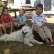 Pet Sitter needed  for 17-27 Sept 2013, country home near Morrinsville, NZ