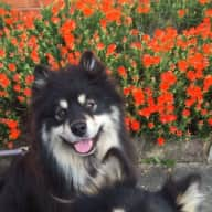 House and Pet Sitter needed for 2 dogs and 2 cats in Sydney