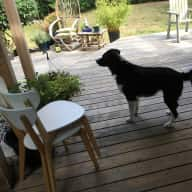 "Beautifull 3Bedroom home with 6 yr. old Border Collie ""Jed"""
