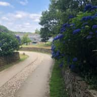 Looking for a dog & house sitter in September in Cornwall