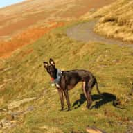 Pet/home-sitter required in Lake District, Summer 2017
