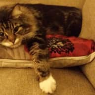 22nd September - 7th October -  Cat and house sitter wanted for North London