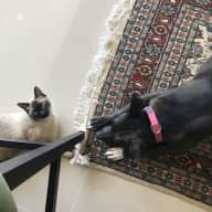 Penthouse Apartment in City Center - easygoing pitbull pup and Siamese cat as your companions