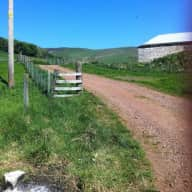 Beautiful country steading near Edinburgh, cats, chickens and veggies