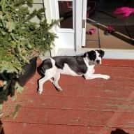 Home & dog sitter in rural Vermont