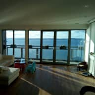Dog sitting two Shih Tzu in a large modern waterfront apartment