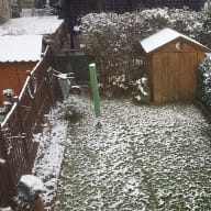 Cat and house sitting in beautiful Vienna/Austria