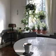 House sitter needed for cat and plants