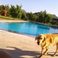 Housesitter couple is needed for four dogs in Southwest coast of Turkey