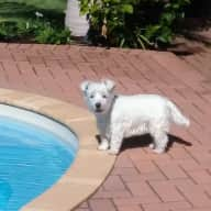 I am looking for someone to look after my Westie from the 18 July 17 to the 8th August 17