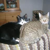 Pet sitter needed for our 2 cats while we are in the UK
