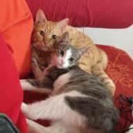 liebevollen Katzensitter (in) gesucht