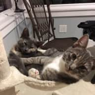 Young cats looking for a playmate in Seattle