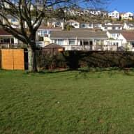 Dog Sitting in South Devon. UK.