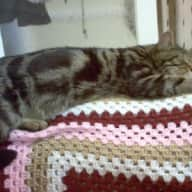 Cat sitter needed for 2 weeks near Nottingham