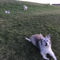 Looking for a pet sitter for 2 lovely dogs, 1 cat and a tortoise