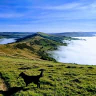 Cat sitter in the Peak District
