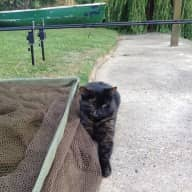 Pet sitter needed for my 3 cats in old Windsor for 12 days in November- lovely location by the river!