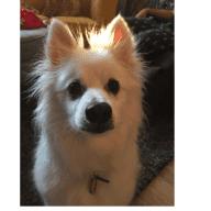 Must love senior dogs  Feb. 16- Feb. 21