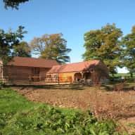 Pet sitter needed for 3 golden retrievers in rural Wiltshire