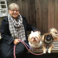Pet sitters needed for our 2 little dogs