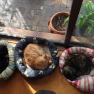 House and cat sitting 2 - 20 October