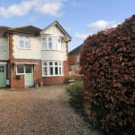 Lovable labradoodles in lovely detached house in Leicester