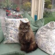 EASY KITTY-SITTING 5TH FEB TO 6TH MARCH in BEAUTIFUL SANDWICH, KENT