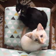 San Francisco Condo in the Castro with two boy cats