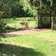Pet and Housesitting in Quiet Burradoo