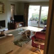 Lovely Wiltshire home with friendly male yellow lab who needs looking after occasionally.