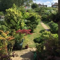 Pet/House/garden sitting - Willesden Green Thurs 21 June 2018 (pm)  - Friday 25 June 2018 (pm)