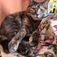 Need a responsible cat lover to take care of Miss June!