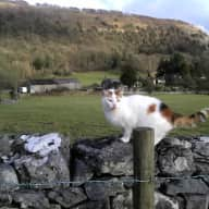 Pet-sitter needed for cat and chickens urgently next week in the Lake District!