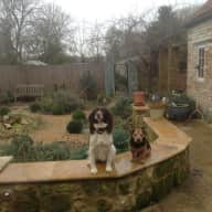 Our very loving springer spaniel and terrier would love some company while her owners take a break !