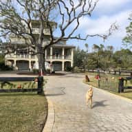 Pet Sitter for Hilton Head Island, South Carolina