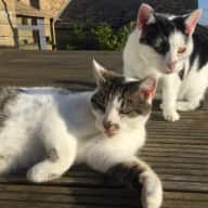 Two cats in Yorkshire, December - January