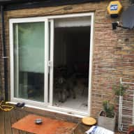 Oodles of Poodles - House Sitter in Central London