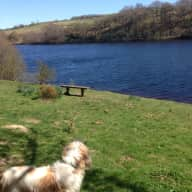 Sitter for elderly dog in beautiful Peak District