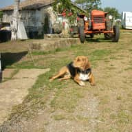 Small farm in France. We are looking for someone to care for our 3 dogs A Beagle and 2 Labradors