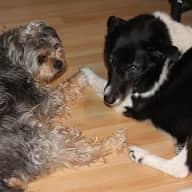 Housesitter for two doggies in lovely rural residential area of Buckhorn, Ontario