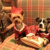 Pet sitter needed for our two dogs from October 11th to October 21st, 2016.