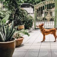 Doggie assistants needed in suburban Kuala Lumpur!