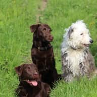 Energetic Pet Sitter for Four Dogs!