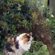 Pet/housesitter wanted for my elderly cat